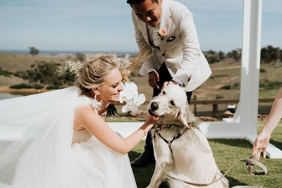 Vendor Q&A: How To Include Your Dog In Your Wedding With I Do Paws